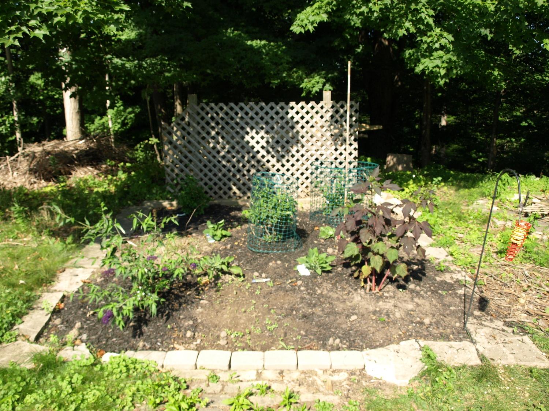 lattice-garden